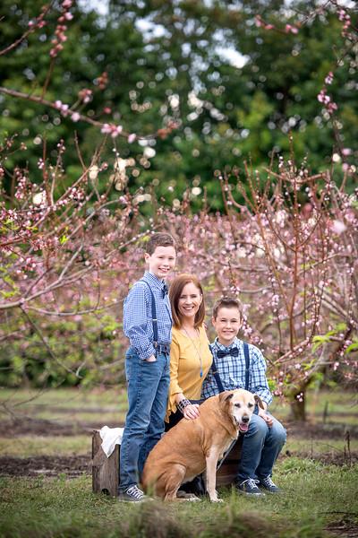 Peach Blossoms - Malatesta