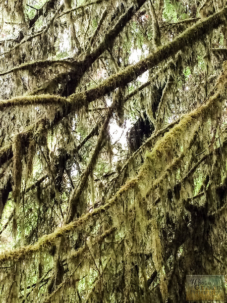 20141015_RedwoodsiPhone_0026.jpg