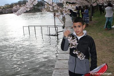 2017 Cherry Blossom DC
