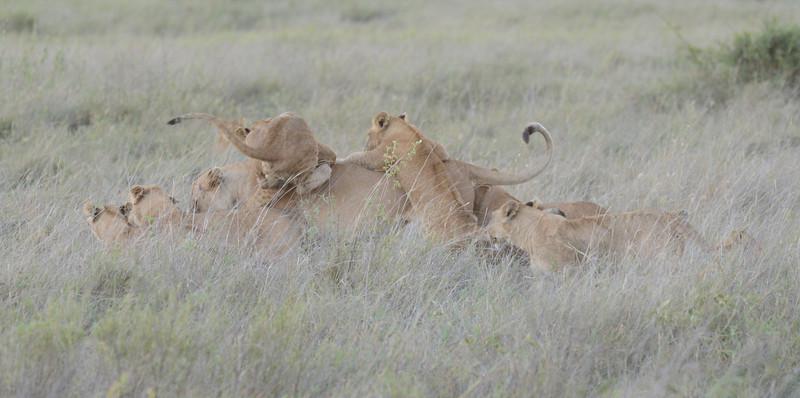 East Africa Safari 362.jpg