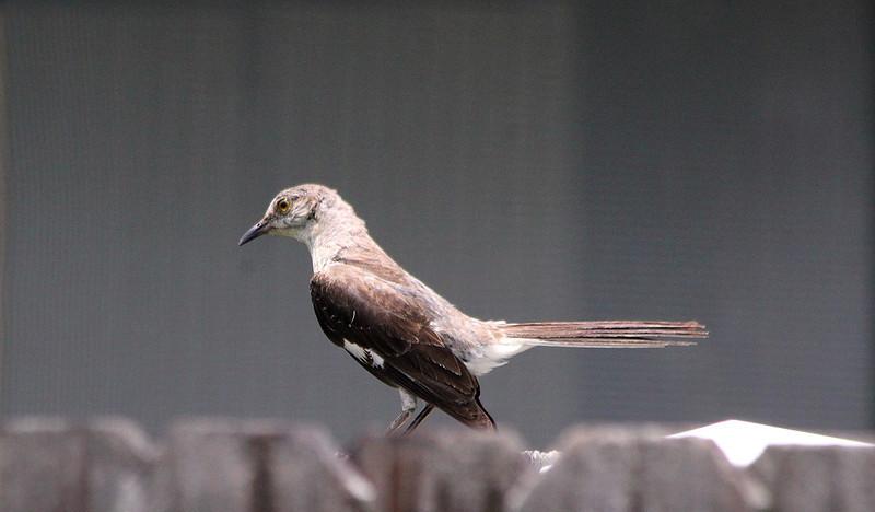 BirdJune23#5012.jpg
