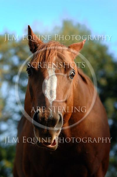Natural Light Workshop - Horses