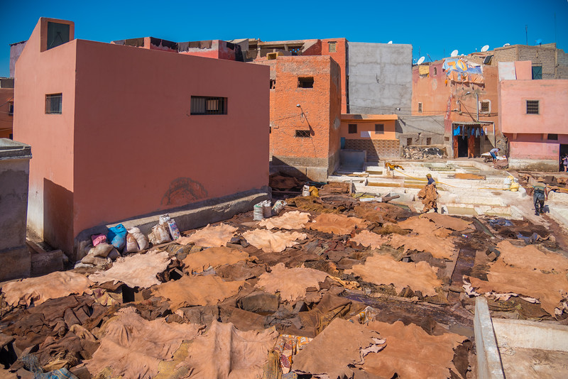 March 09, 2017 pkp - The skins drying at the Tanneries.jpg