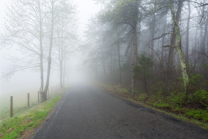 Mentone Spring Foggy Road web.jpg
