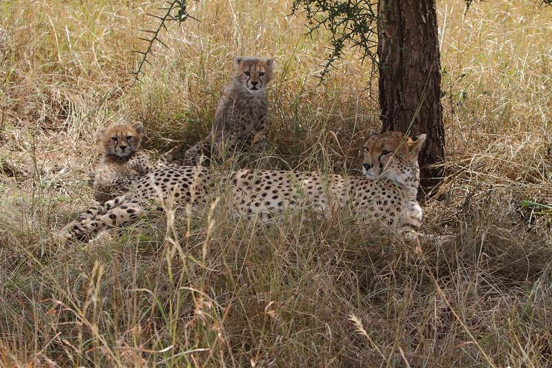 Duma and Cubs 2.JPG