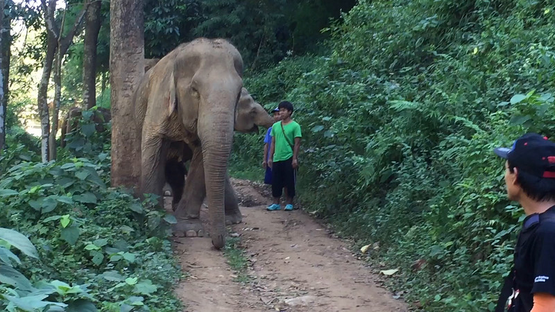 Elephants: Short  video clips, 2015