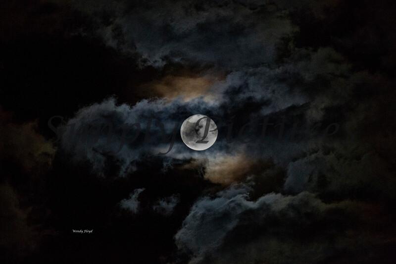 moon011 copy