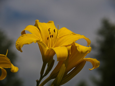 Paula's Flowers-2010