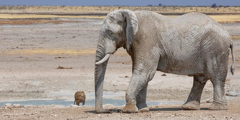 Namibia 69A8396.jpg
