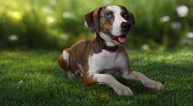 Douglas-dog-2.jpg
