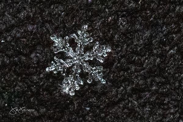 snowflakes-1495.jpg