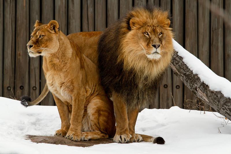 I've got your back if you have mine.....