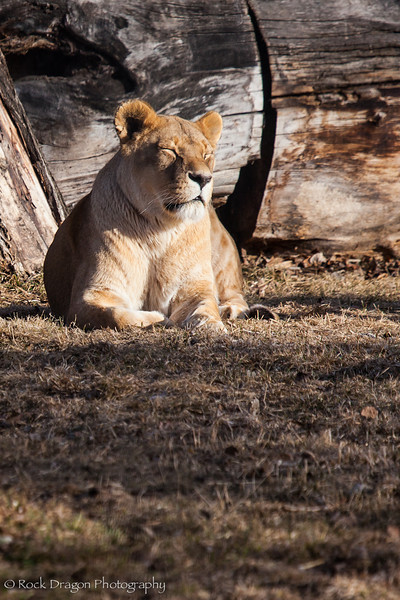 zoo_april_2012-4.jpg