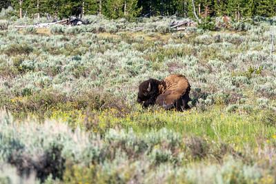 Greater Yellowstone Area