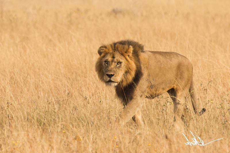 Lions Queen Elizabeth - Ssig-6.jpg