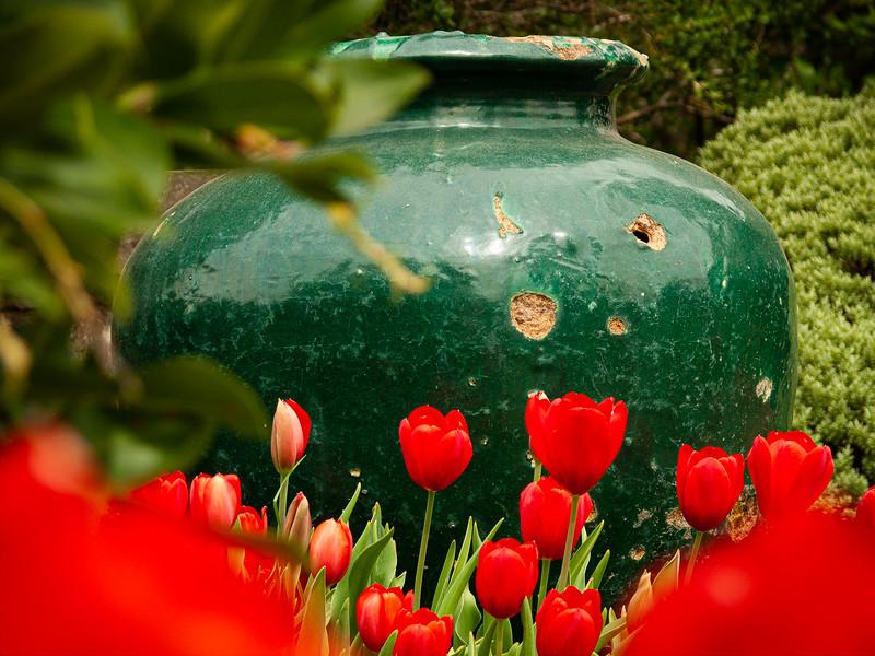 Tulips, Filoli,  Woodside, California, 2007