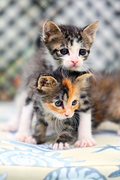 kittens_011-1.jpg