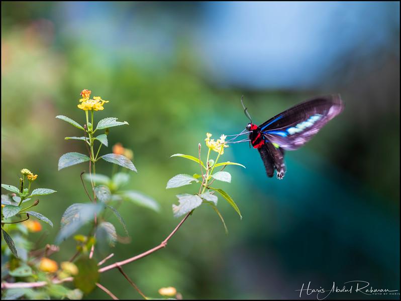 200104 KL Butterfly Park 4.jpg