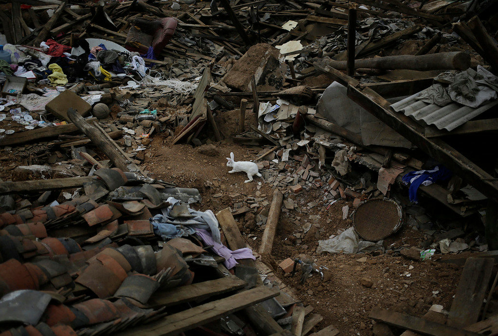 . A rabbit sniffs around the rubble following a massive earthquake in the town of Longtoushan in Ludian County in southwest China\'s Yunnan Province Tuesday, Aug. 5, 2014. (AP Photo/Andy Wong)