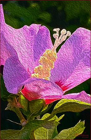Rose of Sharon 15x24__300ppi