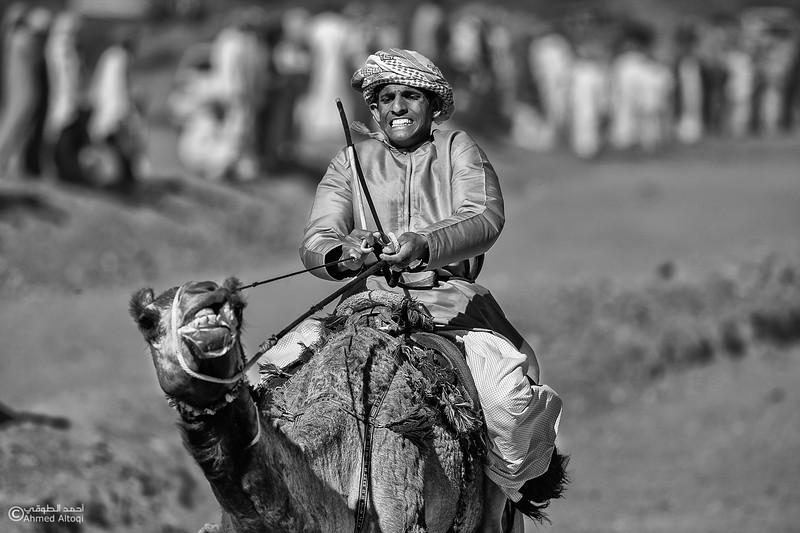 IMGL0214 copy-camels- B&W.jpg