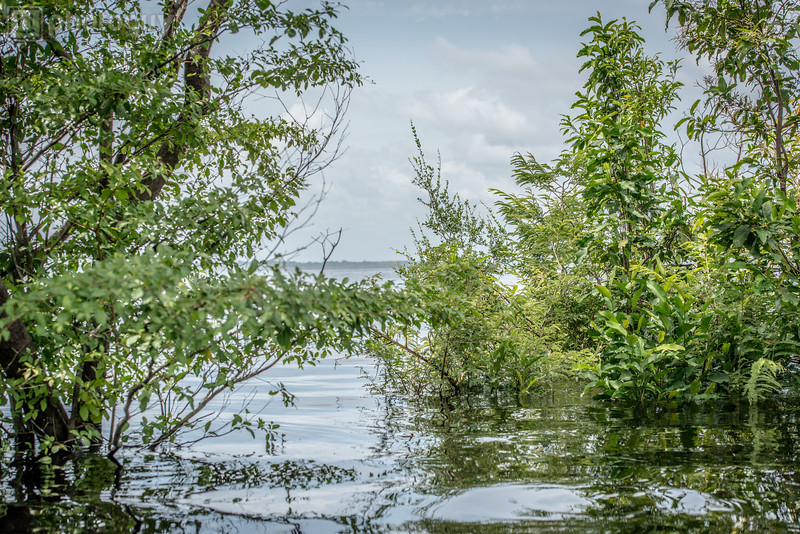 20140120_AMAZON_JUNGLE (18 of 72)