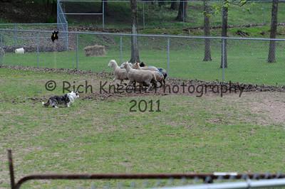 Saturday Sheep