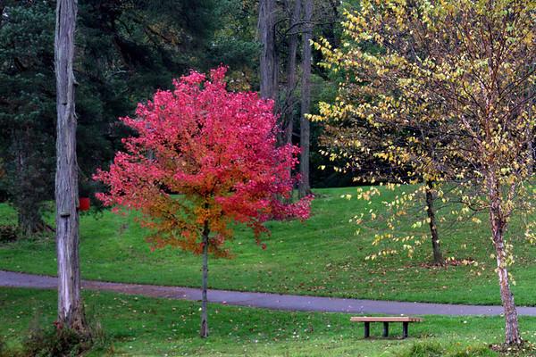 Autumn At Art Van Atta Park