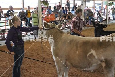4-H Beef Show