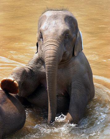 ilubs elephant.jpg