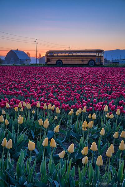 Tulip Bus