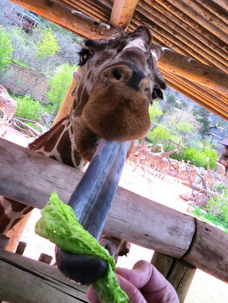 Cheyenne Mtn Zoo (123).jpg