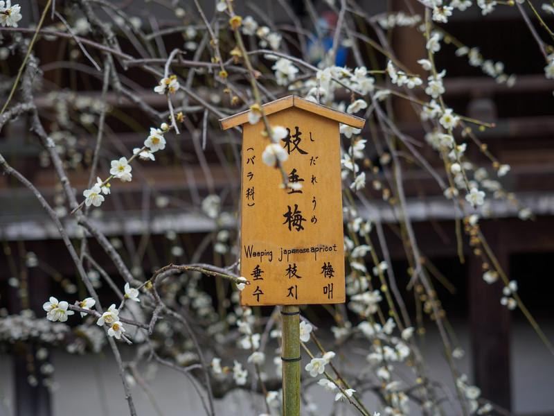 Sogenchi Garden