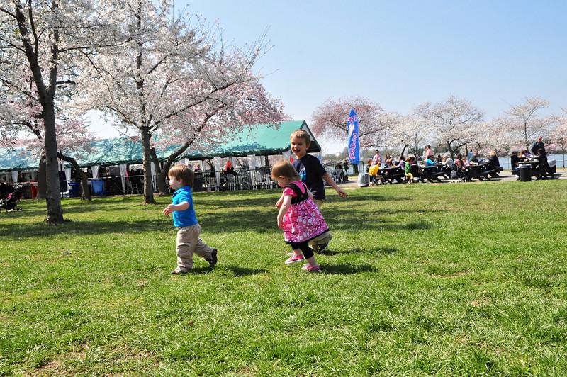 Cherry Blossoms 2014 035.jpg