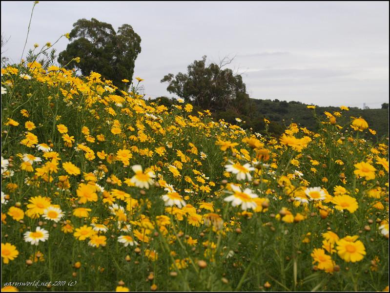 Canyon Park flowers 2010 06.jpg