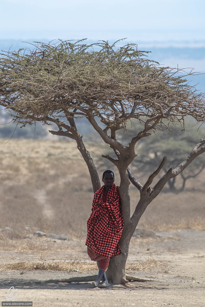 Maasai under the tree