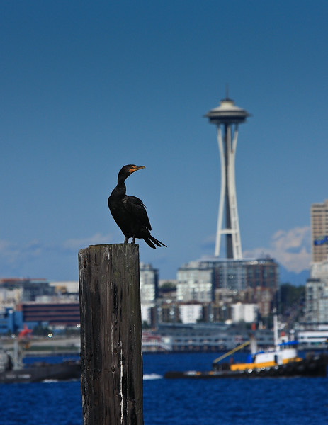 20080913-bird on pier space needle.jpg