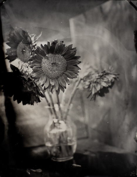 sunflowers (3 of 4).jpg