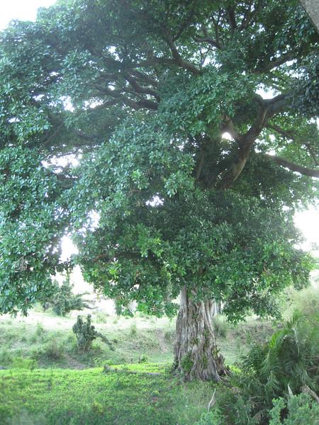 Tanzania14-3866.jpg