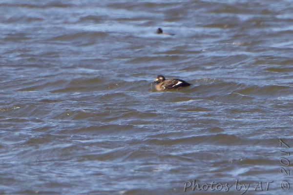2017-11-20 Riverlands Migratory Bird Sanctuary