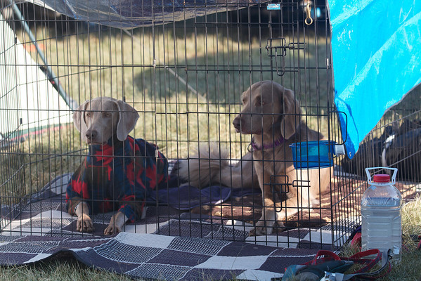 Top Dog Trial - August 18-19, 2012