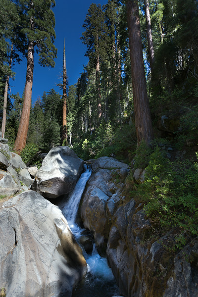 Sequoia_0509.jpg