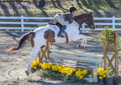 Wills Park Equestrian Center - Horse Jumping