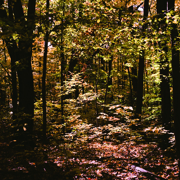 Autumn Hike 120 Film-00029.jpg