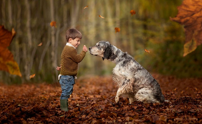 Autumn Colours Dog Photography.jpeg