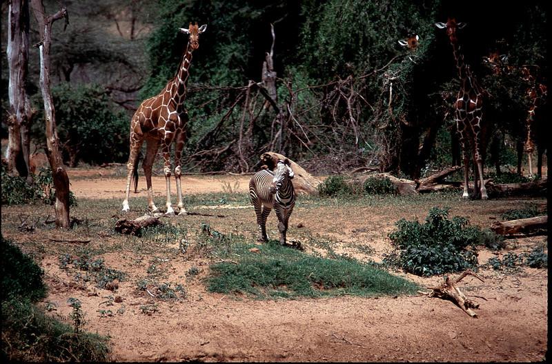Kenya1_059.jpg