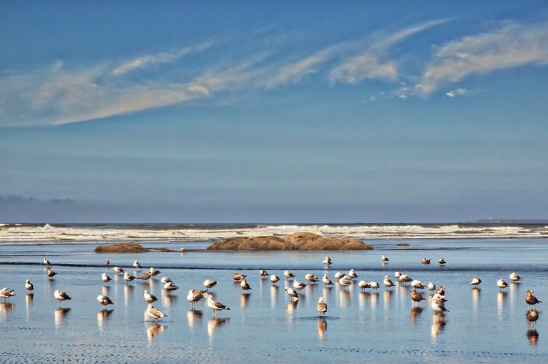 Flock o fSeagulls