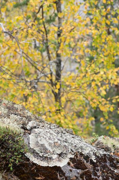 Autumn in Hossa