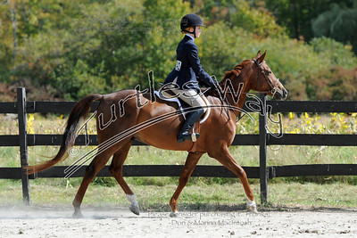 241 Haley & Sweet Movin' Cowboy 09-28-2013