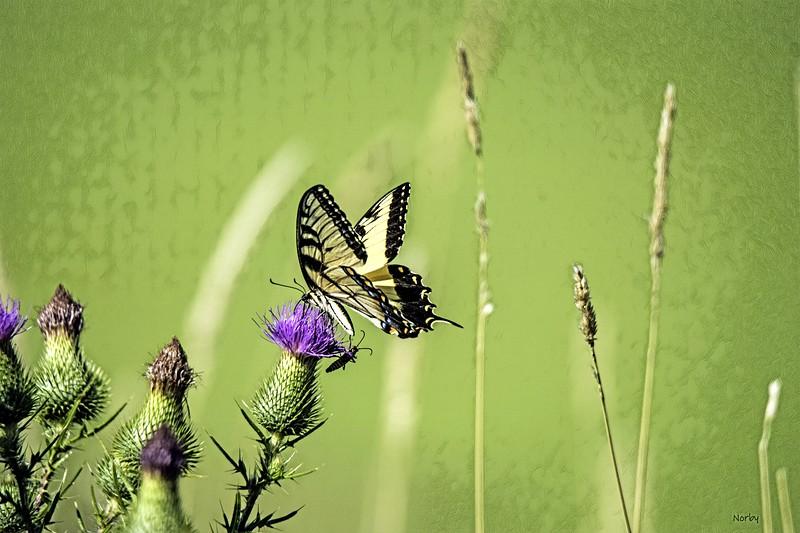 Butterfly Painnt_Creation_2020-08-23_091512.jpg